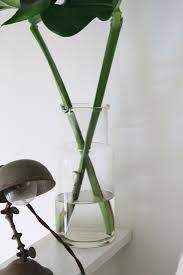 monstera deliciosa big plant small apartment gardenista