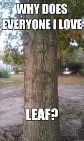 Tree Meme - 10 arbor day memes to inspire you to plant a tree