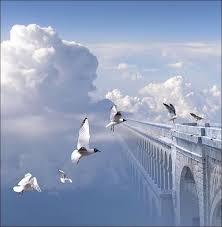s03 sky clouds doves bridge to be continued jpg 782 800 birds
