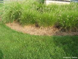 purdue turf tips of the month for june 2013 is grass