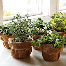 Window Sill Herb Garden Designs 25 Beautiful Window Herb Gardens Ideas On Pinterest Growing
