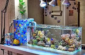 membuat filter aquarium kecil jenis filter akuarium ikan akuarium ikan hias