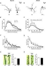 3f si e social maternal high diet leads to hippocal and amygdala dendritic