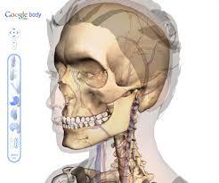 Google Body Anatomy 3dscience Google