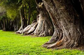 amazing green nature old tree tree photography landscaping