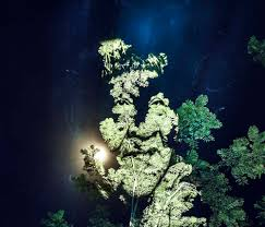 amazon rainforest native plants members of a brazilian indigenous tribe projected onto the amazon