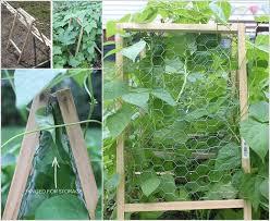easy pea trellis 10 easy yet beautiful diy garden trellis projects
