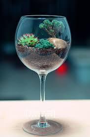 best 25 succulent terrarium ideas on pinterest succulent