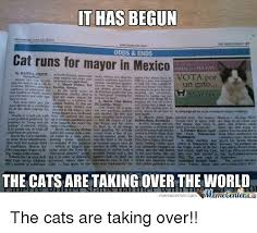 Newspaper Cat Meme - 25 best memes about cat run cat run memes