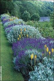418 best gardens and landscaping flowers images on pinterest