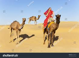 thar desert animals young women wearing saree riding camel stock photo 95148277