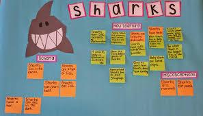 Shark Map Of The World by Shark Schema Chart Teaching With Intention Mrs Jump U0027s Class