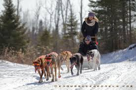 dog sled rides and tours endurance kennels llc
