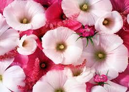 beautiful flowers amazing hd flowers wallpaper beautiful