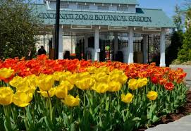 Botanical Garden Cincinnati Don T Miss The Tulips During Zoo Blooms At Cincinnati Zoo