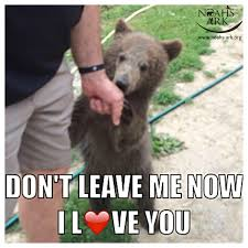 Meme Org - another meme by sarah don t leave me now i love you bear baby