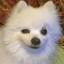 Sad Dog Meme - rest in peace gabe the dog dank memes amino