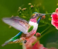 Hummingbird On A Flower - hummingbird and flower painting painting by dr bob johnston