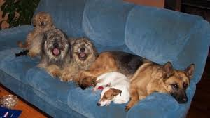 nettoyer pipi de chien sur canap comment enlever l odeur de chien dans une maison top affordable
