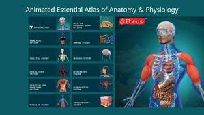 Anatomy And Physiology Dictionary Free Download Get Anatomy Atlas Animated Microsoft Store