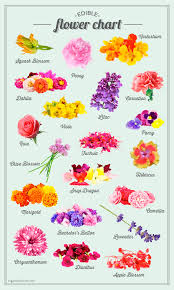 Where To Buy Edible Flowers - sugar and charm u0027s edible flower chart sugar and charm sweet