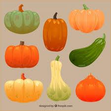 thanksgiving pumpkins set vector free