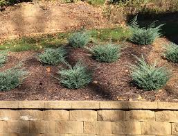 best 25 landscaping a slope ideas on pinterest backyard hill