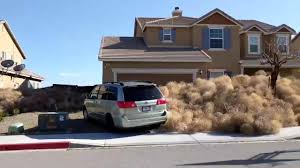 california style houses tumbleweeds bury southern california town i can t see my jungle