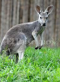 imagenes animales australia en fotos animales de australia los nuevos huéspedes del zoológico