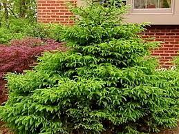 shrubs and more diy