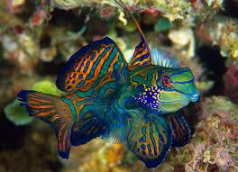 five aquarium fish best left in the ocean hakai magazine