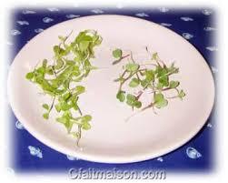 pousse pousse cuisine graines germées et jeunes pousses culture avec ou sans terre