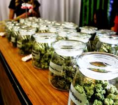 halloween city northglenn co the guide to retail marijuana in colorado 303 magazine