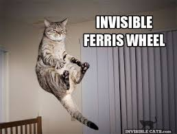Invisible Cat Meme - i have a problem with invisible cat pics animals pinterest