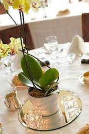 Orchid Centerpieces I Love Orchids And If I Use Them As Centerpieces People Could