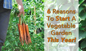 6 reasons to start your vegetable garden this year rebel health