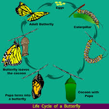 life cycle of a butterfly science lessons for kids the k8