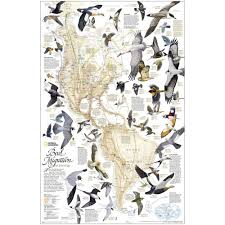 Map Of The Western Hemisphere Bird Migration Western Hemisphere Map Paper Dura Globes