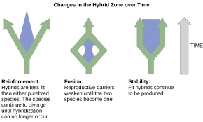 hybrid zones and rates of speciation boundless biology