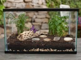 how to make a terrarium kiwireport