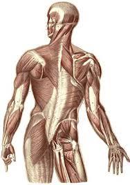 Human Anatomy And Physiology Books Anatomy U0026 Physiology Books U2013 Distance Learning Systems Inc