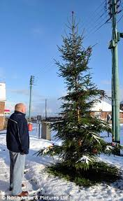 is this the worst tree in britain embarrassed villagers