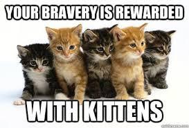 Kittens Memes - kittens memes quickmeme