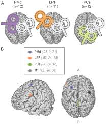 dissociating the role of prefrontal and premotor cortices in