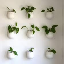 agnes blum plants plant wall and walls