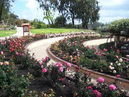 Balboa Park Botanical Gardens by The 2 Minute Gardener Garden Resources Balboa Park Rose Garden