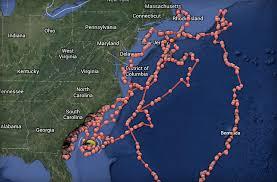 Florida Shark Attack Map Preventing Shark Attacks With Data Domo