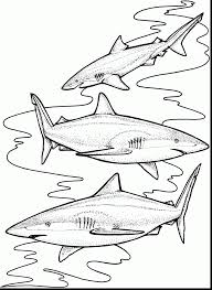 spectacular tiger shark coloring page printable with shark