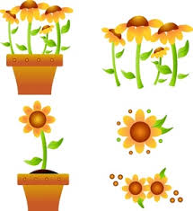 flowers clipart image selection of flower images potted