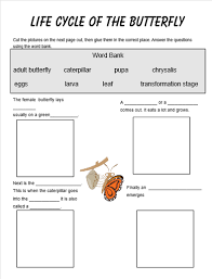 all worksheets life cycle of a butterfly printable worksheets